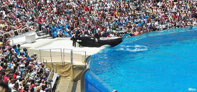 spectacle seaworld