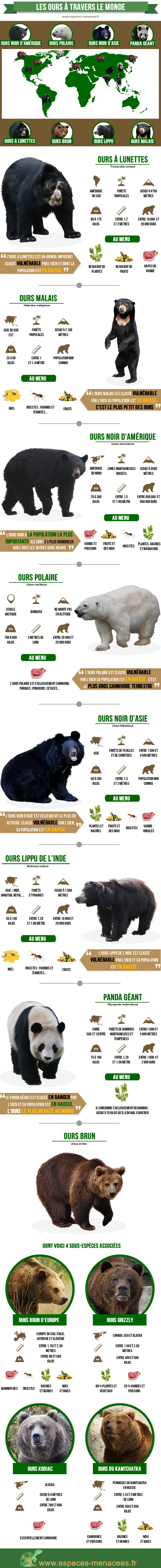 infographie ours