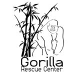 Gorilla Rescue Center, sensibiliser le public à la disparition des grands singes