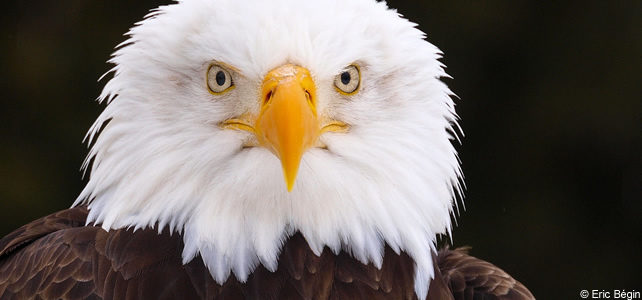 reforme endangered species act