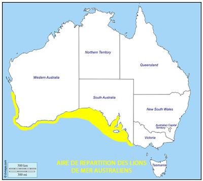 aire de répartition lion de mer australien